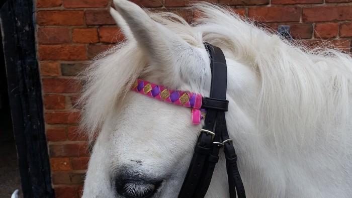 Velvet Pony Browband: Pink and Purple Velvet with Glitter Gold (not velvet)