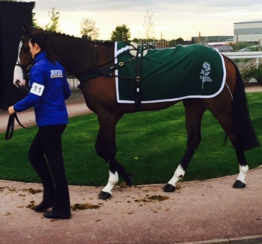 Superior Melton Paddock Sheet with logo embroidered on each side