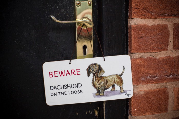 Beware Dachshund on the Loose