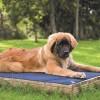 Hyperkewl Evaporative Cooling Dog Pad