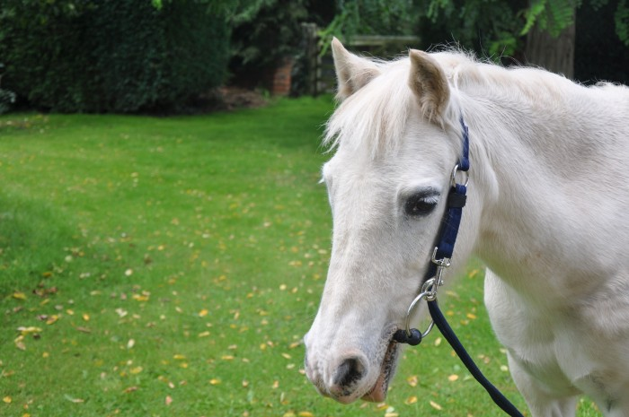The Fitall Headcollar
