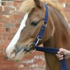 The Fitall Pony to Horse Headcollar