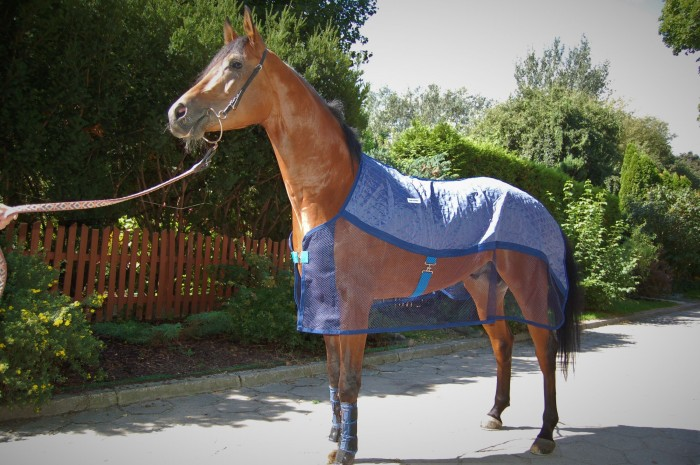 The Aerochill Cooling Rug worn on a flat race horse.