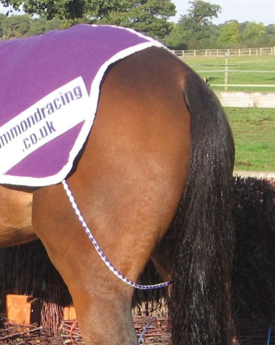 A fillet string in purple and white, shown with a purple melton rug and paddock sheet patch.