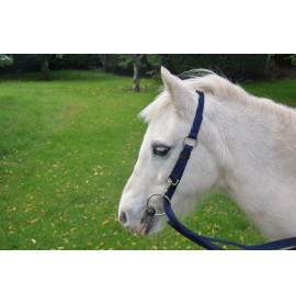 The Fitall Headcollar, essential travel kit.