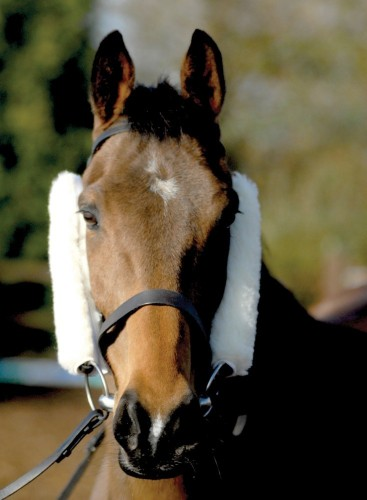 Cheek Pieces/French Blinkers image #