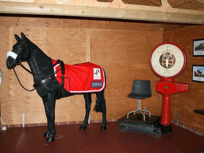 The Treehouse sponsored plastic horse at Plumpton with embroidred paddock sheet patches!