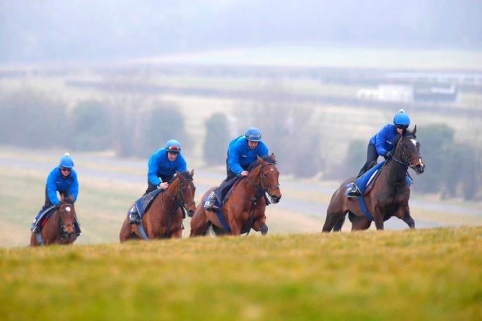 Jonjo O'Neill's Team in their bespoke royal blue Jomiluti sets.