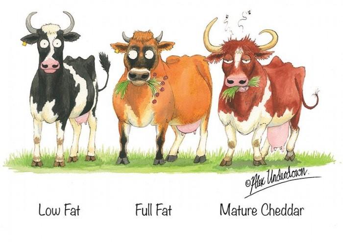 Low Fat, Full Fat, Mature Cheddar