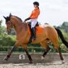 Orange Dressage set