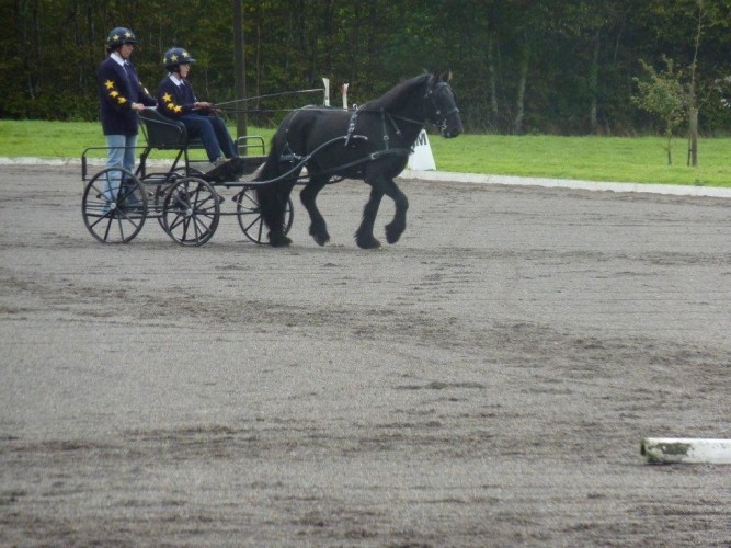 Lochlan King Driving Topper At Fenix Carriages Driving Trials.
