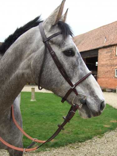 The race bridle